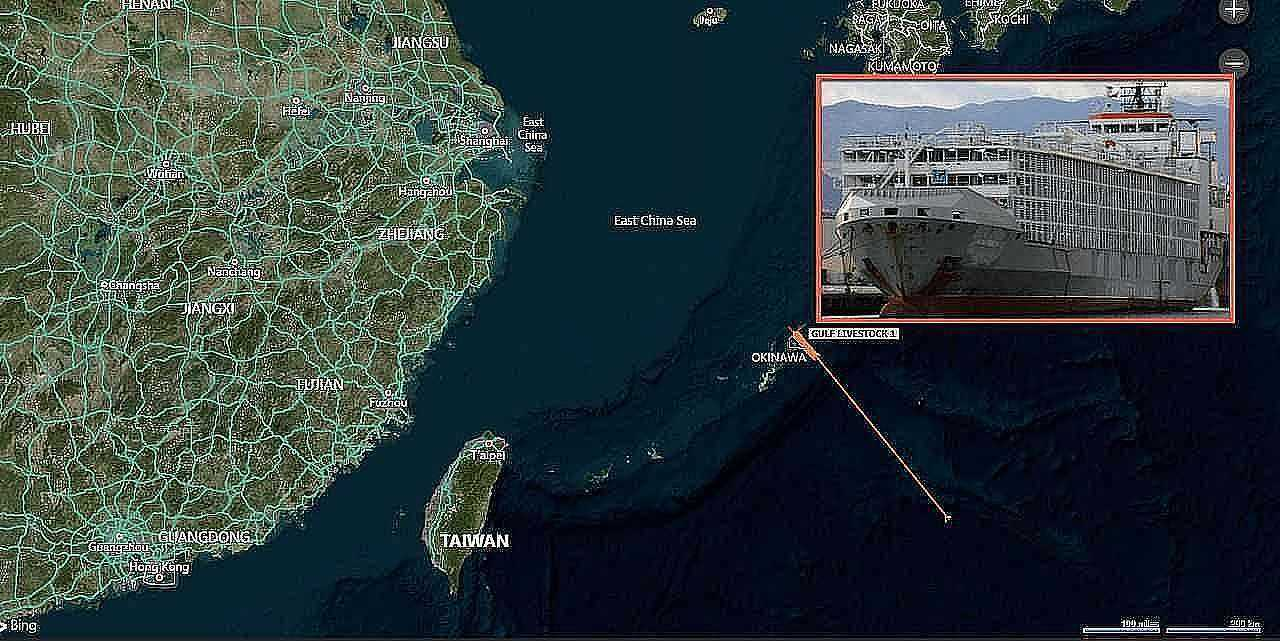 cargo ship with dozens of crew 6000 cattle capsizes off japan coast